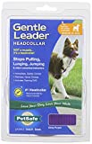 PetSafe Gentle Leader Headcollar, Medium, Deep Purple