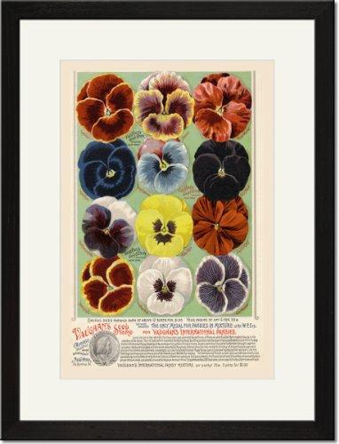 Black Framed/Matted Print 17x23, Vaughan's Seed Store - Pansies