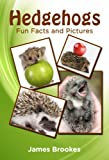 Hedgehogs Fun Facts and Pictures
