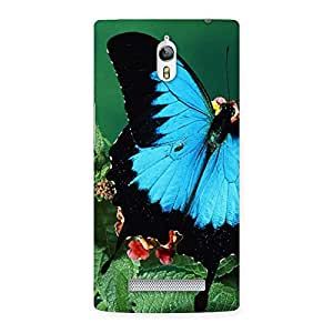 Special Butterfly on Plant Back Case Cover for Oppo Find 7
