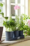 Sophie Conran for Burgon and Ball Gardeners Herb Pots in a tray[Grey]