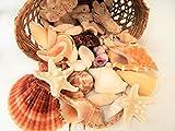 天然素材 ミニヒトデ/ 白サンゴ 貝殻セット 10種類 300g シェルバスケット ナチュラル ハワイインテリア 手作り 工作材料 ギフトセット