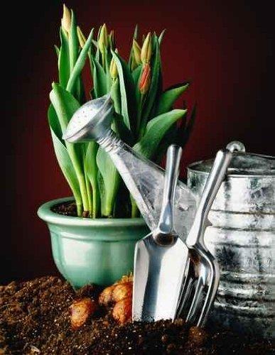 Home Gardening - 18