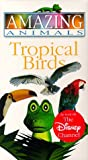 Amazing Animals - Tropical Birds [VHS]