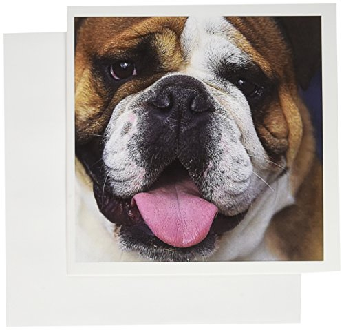 3dRose Greeting Cards, 6 x 6 Inches, Pack of 12, An English Bulldog in Belgium-Eu04 Dfr0027 (gc_71531_2) (English Bulldog Birthday Card compare prices)