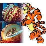 Rare Tigger Melon 10 Seeds - Heirloom - Delicious -Easy