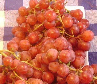 VANESSA RED SEEDLESS GRAPEVINE - 2 Year Old (Bare Root Grapes compare prices)