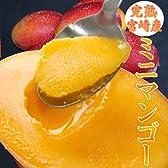 369 小さいけどメチャうまマンゴー! 宮崎県産 完熟 ミニマンゴー  宮崎産 完熟マンゴー!甘くて濃厚な味わいが絶品!!