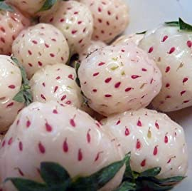 White Carolina Pineberry Plants - Bareroot - Pineapple and Strawberry Flavor