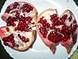 Pomegranate, Dwarf Tree, Bonsai, 15 Seeds! Groco