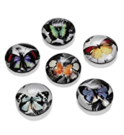 6 Butterfly Design Magnets