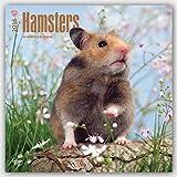 Hamsters 2016 Calendar