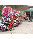 Set of 2 Flower Tower Freestanding Planter