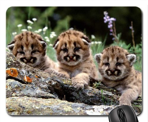 Cougar Cubs Mouse Pad, Mousepad by Rock Bull