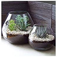 Set of 2 Decorative Modern Round Clear Glass Display Vases / Bowl Candleholders / Air Plant…