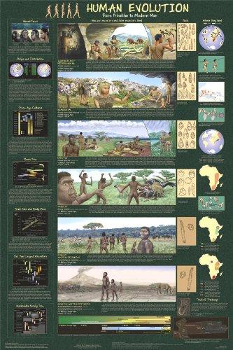 Human Evolution Poster 24 x 36