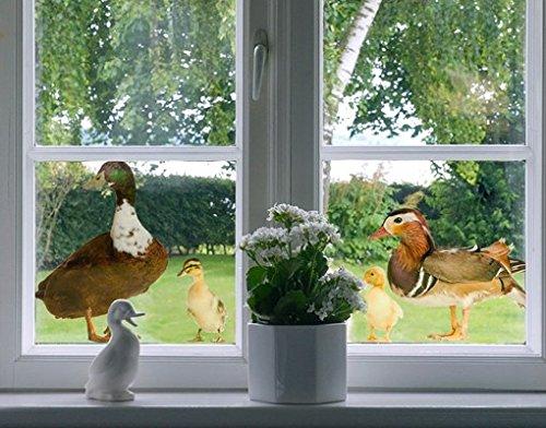 Fenstersticker No.722 The Duck Family Tiere Bauernhof Ente Küken Vogel Gans, Fenstersticker, Fensterfolie, Fenstertattoo, Fensterbild, Fenster-Deko, Fensteraufkleber, Fensterdekoration, Glas-Sticker
