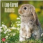 Lop-Eared Rabbits 2014 Square 12x12