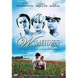 Wildflower ( Wild flower )
