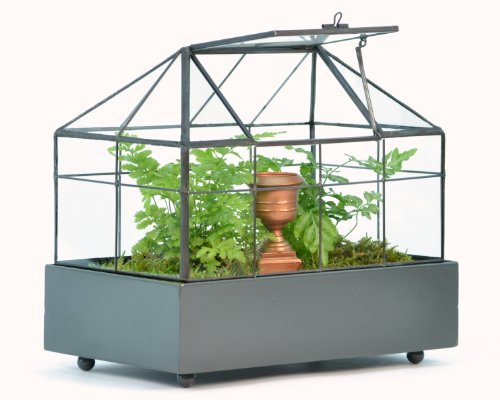 H Potter Terrarium for Plants