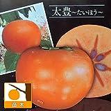 柿(カキ):太豊(たいほう)4~5号ポット