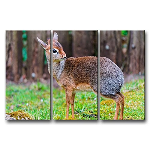 3 Panel Wall Art Painting Dik-Dik Staring In The Grass Prints On Canvas The Picture Animal Pictures Oil For Home Modern Decoration Print Decor For Kitchen