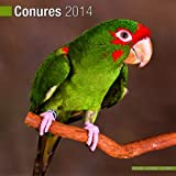 Conures 2014