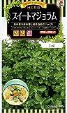 スイートマジョラム   タキイ種苗のハーブ種です
