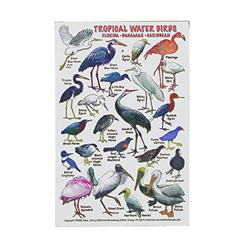 Innovative Tropical Water Birds of Florida Caribbean ID Card