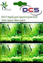 DCS(037) 5 Pagoda grass Aquarium Grass Seeds Water Aquatic Plant Seeds-9