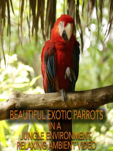 Beautiful Exotic Parrots in Jungle Environment Relaxing Ambient Video