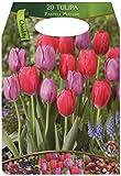 Großpackung mit 20 pastellfarbene Tulpen Farbmischung