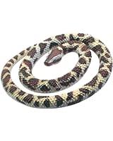 Rubber Rock Python