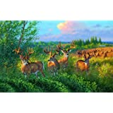 Reunion 1000pc Jigsaw Puzzle by Wild Wings