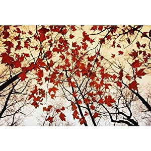 (24x36) Raymond Gehman - Bare Branches and Red Maple Leaves Art Print Poster