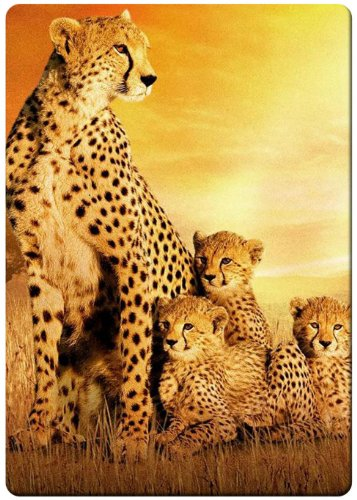 Cheetah family cute fridge magnet
