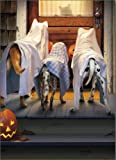 3 Dogs Trick Or Treating Funny Halloween Card