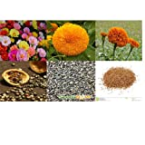 alkarty portulaca sungold and marigold seed