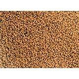 ウィートグラス 玄麦 無農薬 無施肥 小麦 種 300g