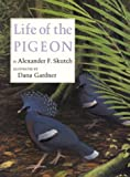 img - for Life of the Pigeon book / textbook / text book