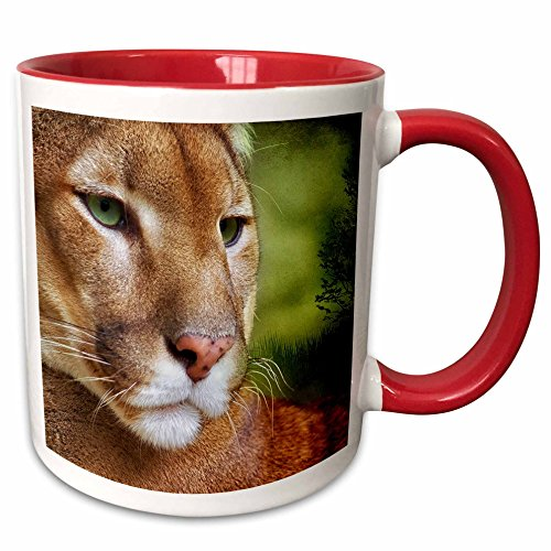 3dRose Doreen Erhardt Wildlife - Beautiful Mountain Lion Painting from a photo courtesy of Bas Lammers. - 11oz Two-Tone Red Mug (mug_173000_5)