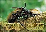 300ピース ゾウカブト対ヘラクレスオオカブト
