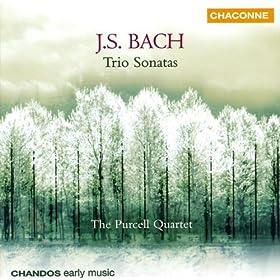 Trio Sonata No. 3 in D Minor, BWV 527 (arr. R. Boothby): II. Adagio e dolce