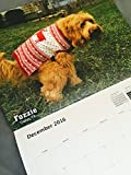 Pooping Pooches Dog Calendar (1)