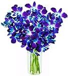 KaBloom Orchid Bouquet with Vase, Blu...