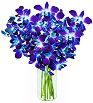 KaBloom Orchid Bouquet with Vase, Blu…