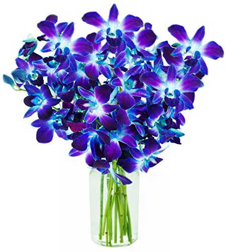 kabloom-orchid-bouquet-with-vase-blue-10-stems