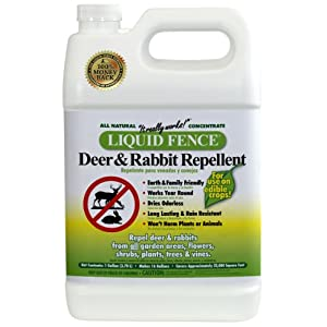 Does Terminix Bed Bug Treatment Work