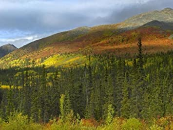 Boreal forest beneath Goldensides Mountain, Tombstone Territorial Park, Yukon Territory, Canada