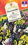 Sea Lavender Statice Mix 60 Flower Seeds/MULTI-BUY DISCOUNT/For standard, bedds and dry bouquets/Limonium Sinuatum/